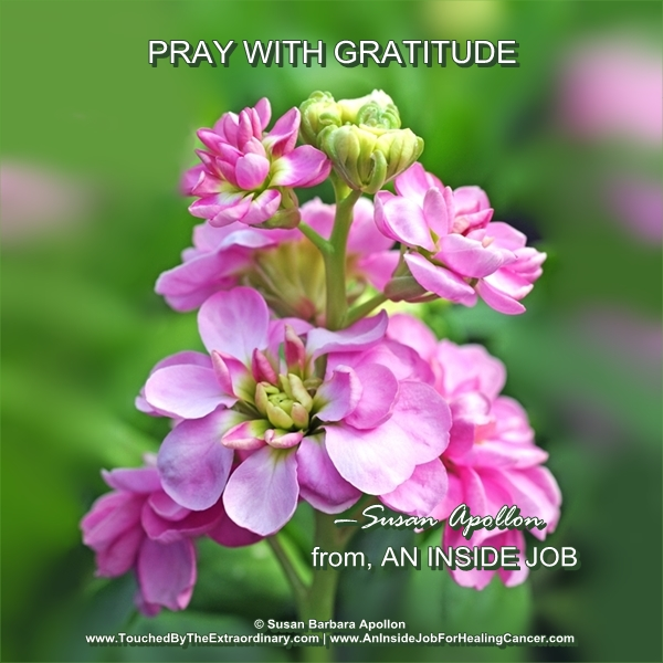 Pray with Gratitude Affirms What You Want Is Already Yours…