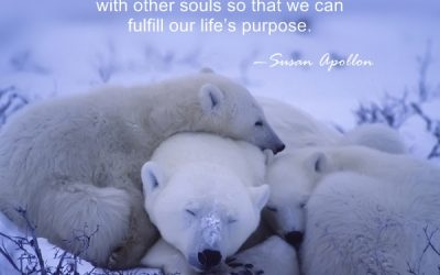 We are souls seeking connections…