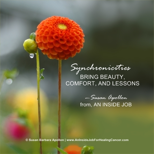 Synchronicities bring beauty, comfort and lessons