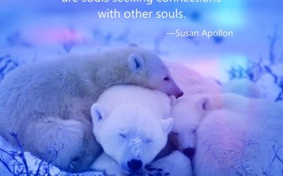 All of us on this earth are souls seeking connections…
